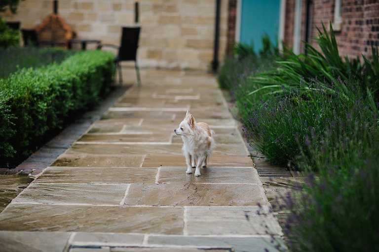 Dog walking around Priory Cottages